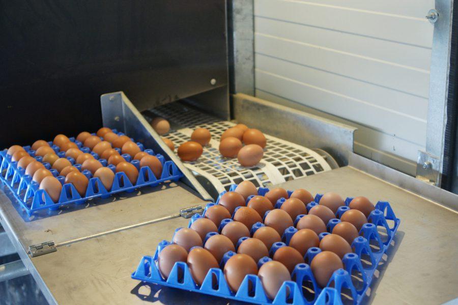 Eier aus Freilandhaltung